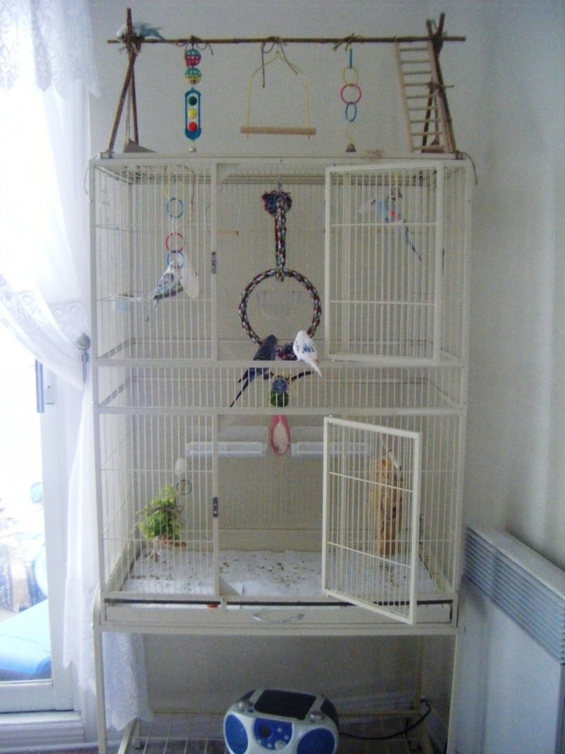 Nouvelle cage, difficile choix! - Page 2 Dscf1410