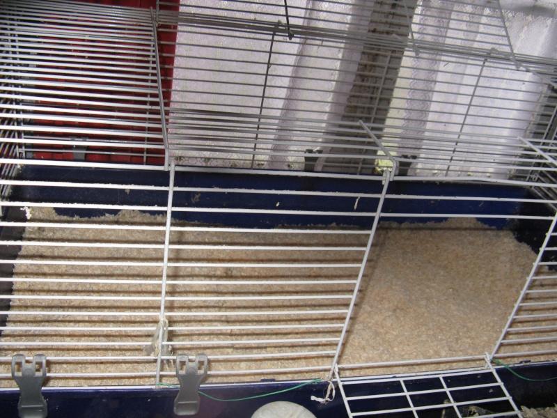 aménagement de cages d'hiver pour cailles reproductrices Img_4414