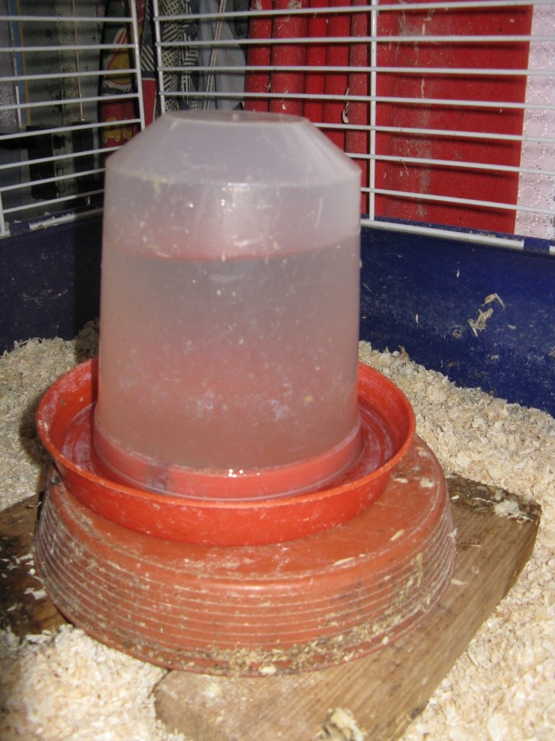 aménagement de cages d'hiver pour cailles reproductrices Img_4416