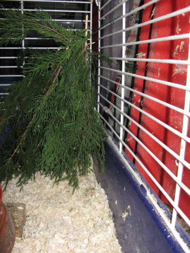 aménagement de cages d'hiver pour cailles reproductrices Img_4417