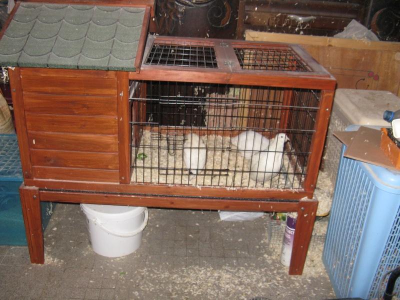 aménagement de cages d'hiver pour cailles reproductrices Img_4425