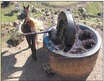amazigh - Les Outils et accessoires Amazigh antique Olivme10
