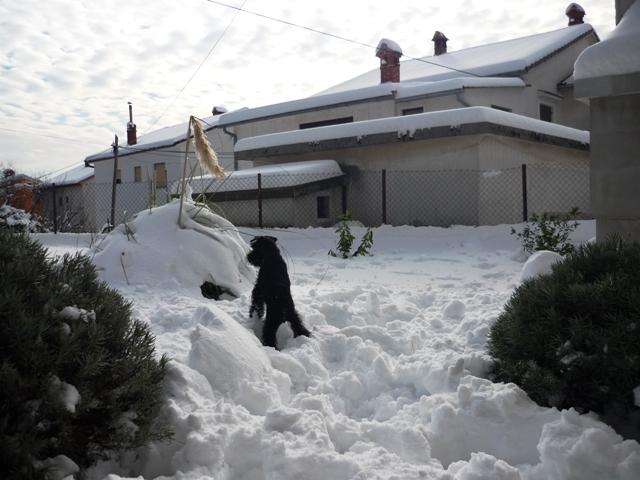 Peppi love snow   Bilo_j10