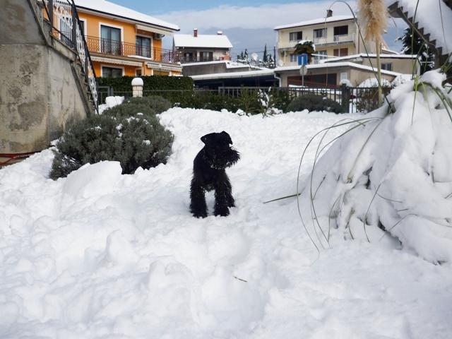 Peppi love snow   Nando_10