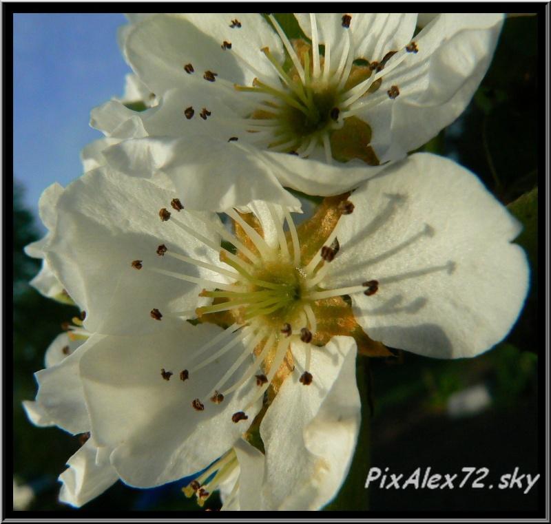belle apres midi de printemps  Recadr17