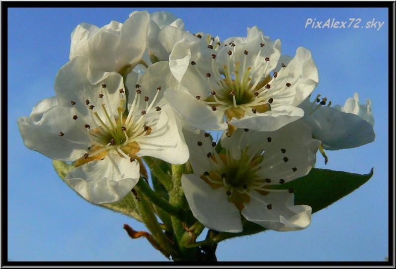 belle apres midi de printemps  Recadr18
