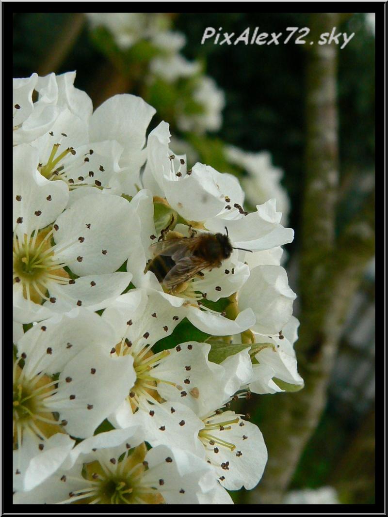 belle apres midi de printemps  Recadr20