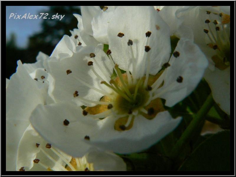 belle apres midi de printemps  Recadr21