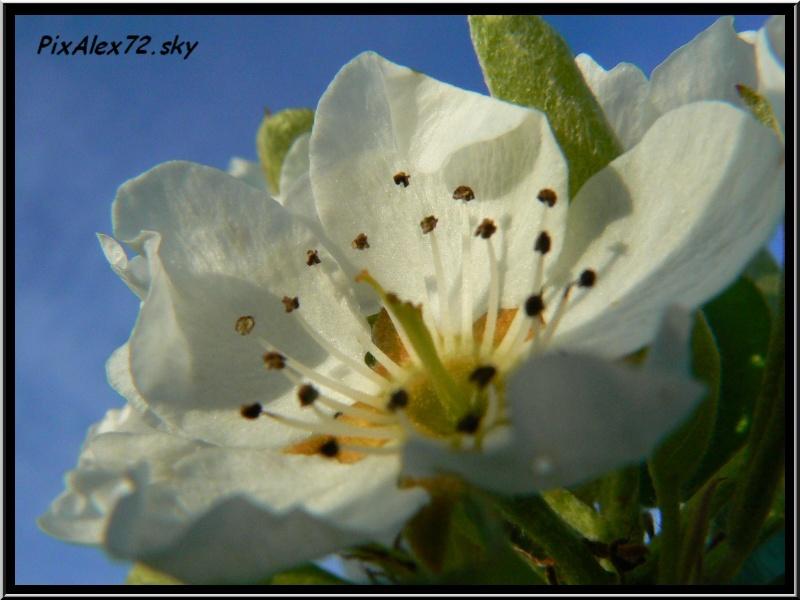 belle apres midi de printemps  Recadr22