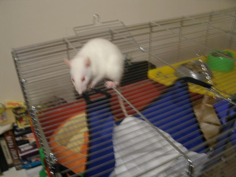 RECHERCHE cage pour rats âgés... Gedc0010