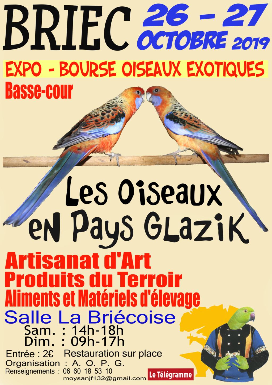 Quelques colombidés en expo à Briec dans le centre Finistère. Aopg_a10