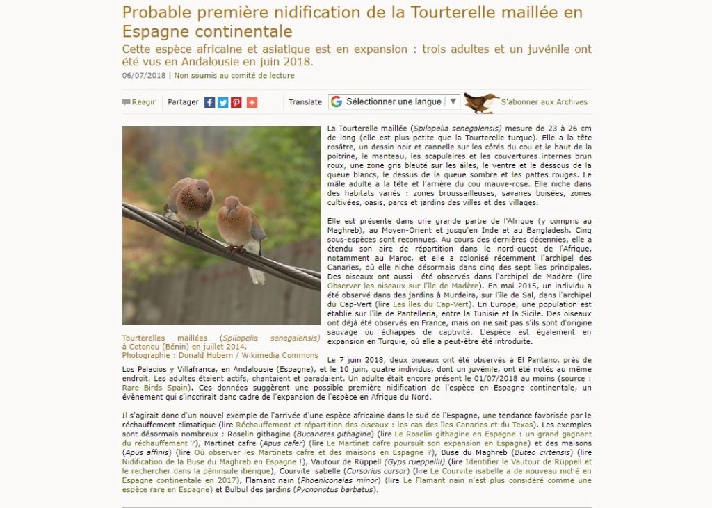 reproduction de la Tourterelle maillée (S. senegalensis) en Europe Ornith10