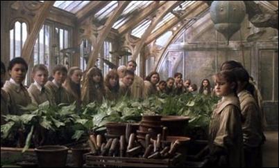 Greenhouses Profes10
