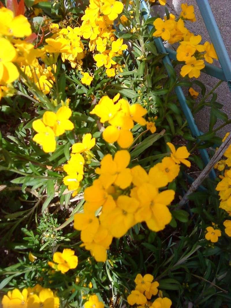 fleurs 02110