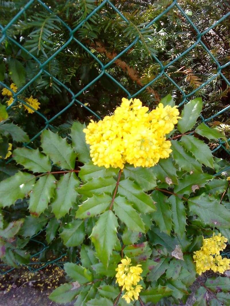 fleurs 02211
