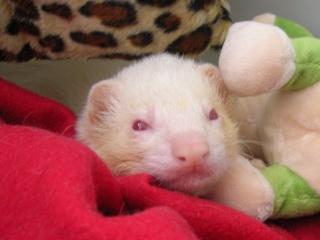 [Décédé] Gollum, mâle albinos Gollum10