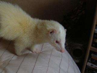 [Décédée] Mini-Pousse, femelle albinos Mini-p10