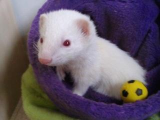 [Décédée] Sally, femelle albinos Photo010