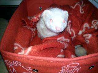 [Décédée] Sally, femelle albinos Photo011