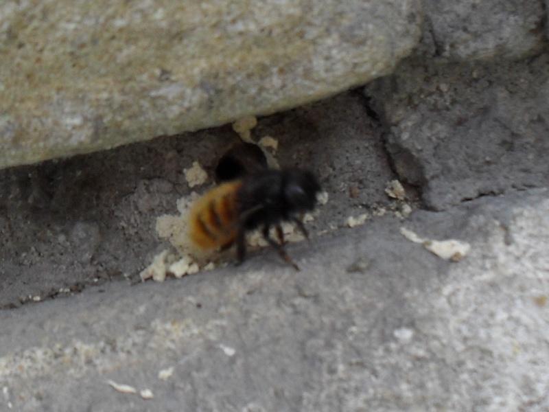 abeilles solitaires Printe22