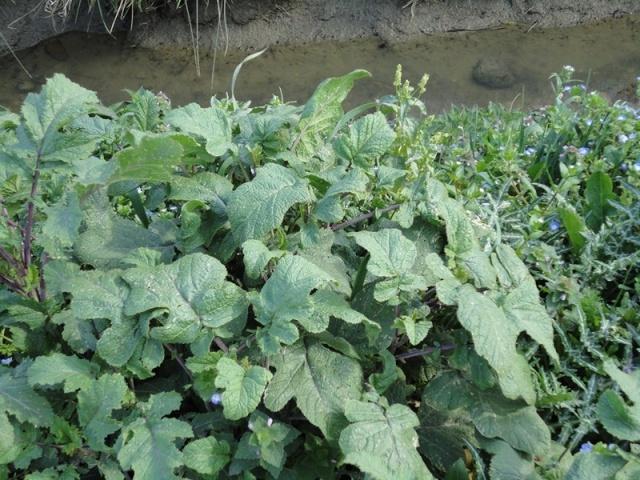 plante a identifier5 Dsc00113