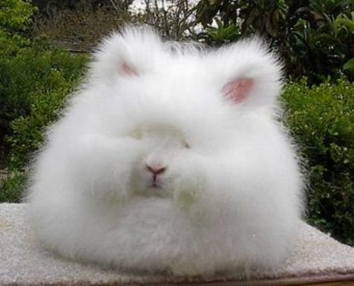 Pictures only Angora10