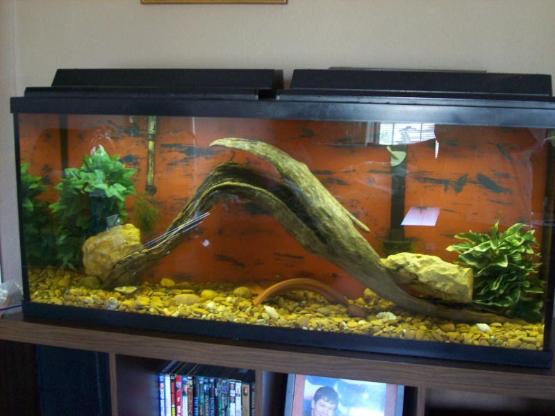 Driftwood for the 120 gallon.  100_3126