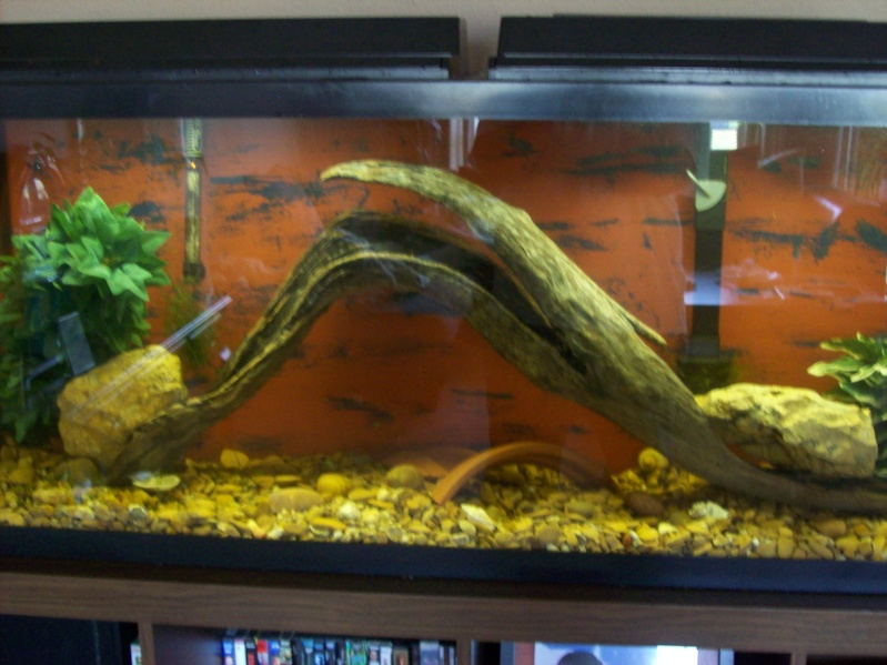 Driftwood for the 120 gallon.  100_3127