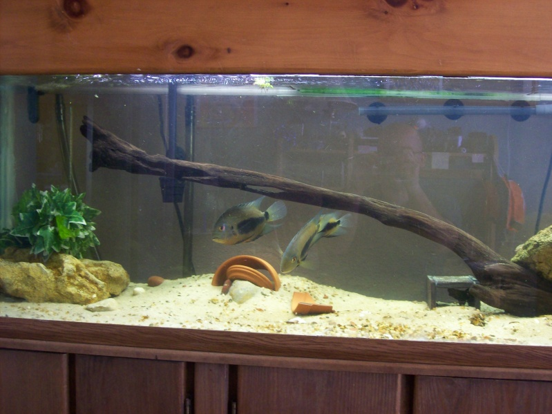 Driftwood for the 120 gallon.  100_3212