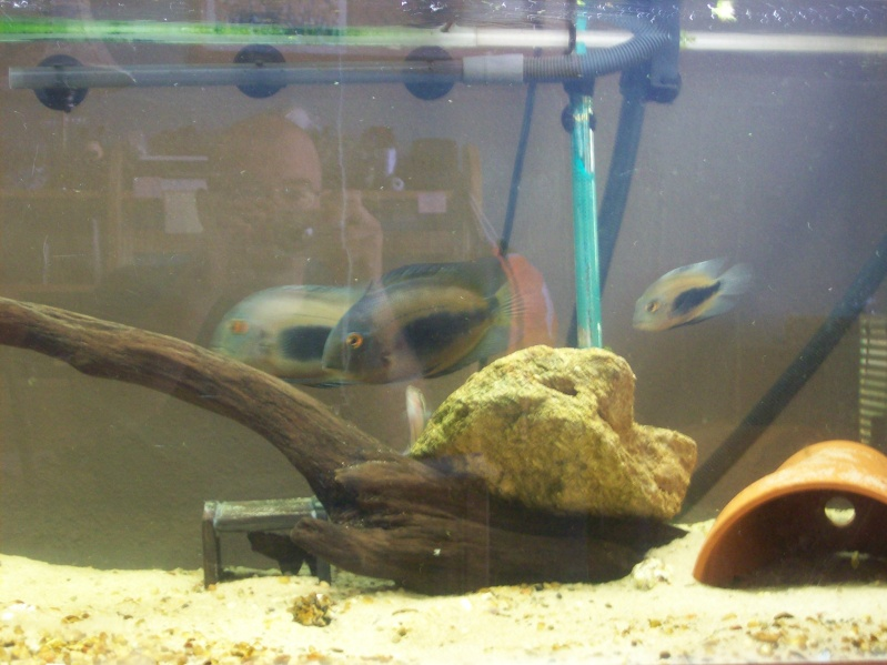 Driftwood for the 120 gallon.  100_3214