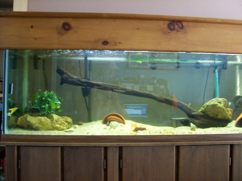 Driftwood for the 120 gallon.  100_3215