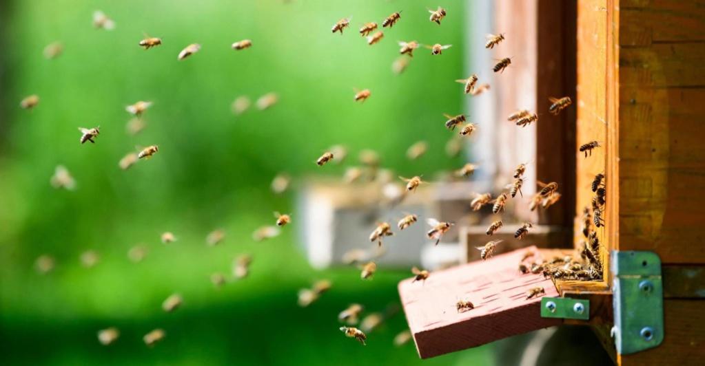 El caso de las abejas desaparecidas. - Página 3 15264710