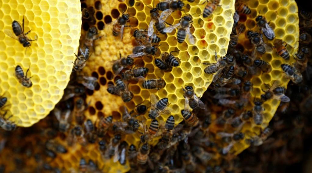 El caso de las abejas desaparecidas. - Página 3 15264711