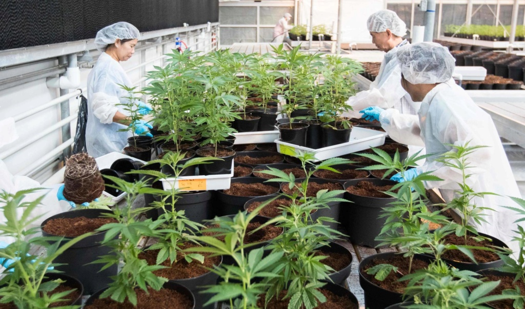 Libre comercio, sus repercusiones en el tráfico de drogas. - Página 7 15396713