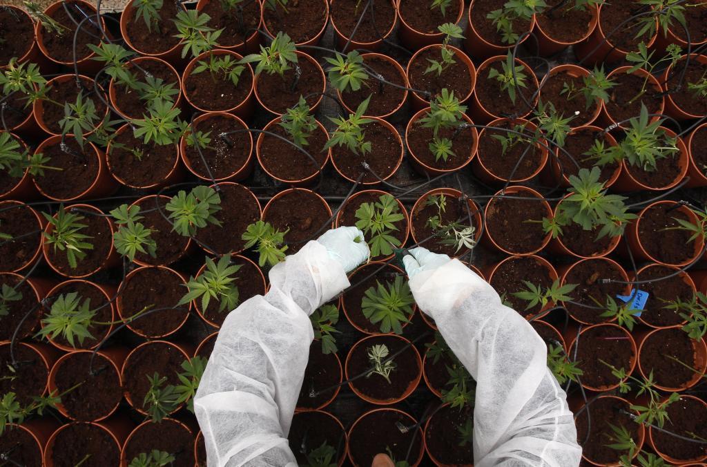 Libre comercio, sus repercusiones en el tráfico de drogas. - Página 7 15530111