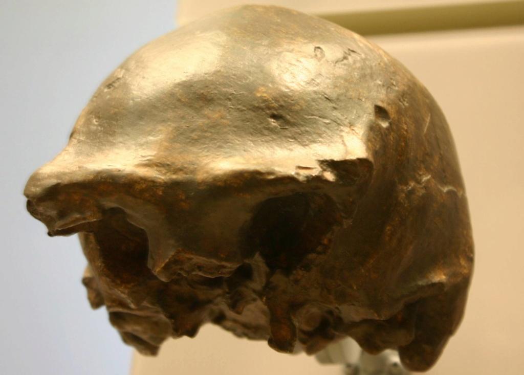 Los 'Homo erectus'  no estaban solos. Los últimos vivieron en Indonesia hace 117.000 años. [Historia] 15766710