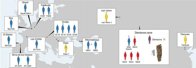 Por primera vez, reconstruyen el epigenoma de neandertales y denisovanos, con los que estamos emparentados, y lo han comparado con el nuestro. [Historia] 18082211