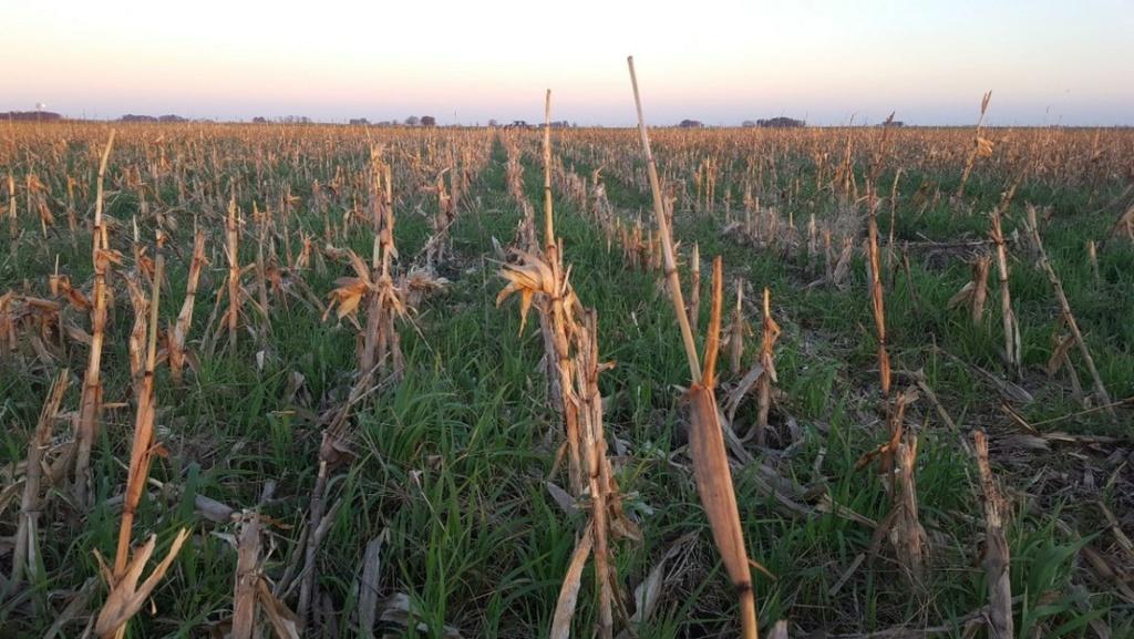 ¿Se puede masificar la producción agroecológica? El caso del terrateniente argentino que eliminó los químicos y redujo sus costos un 60 %  60b4c711