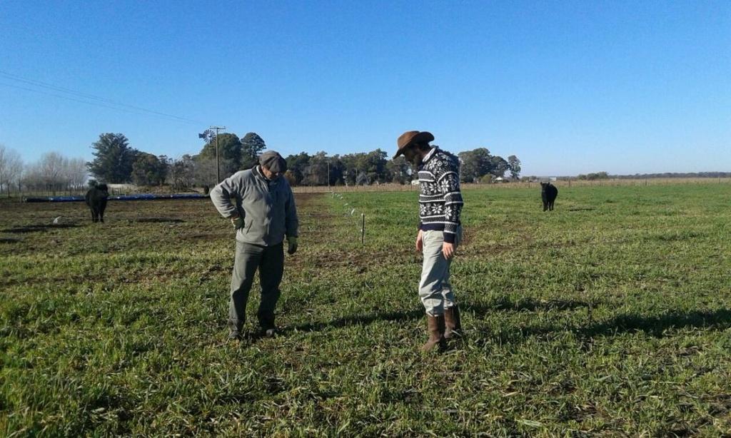 ¿Se puede masificar la producción agroecológica? El caso del terrateniente argentino que eliminó los químicos y redujo sus costos un 60 %  60b4c713