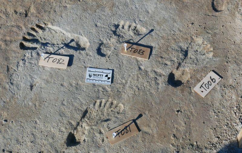 América. Actividad humana hace 23.000 años, milenios antes de lo conocido hasta ahora. Huellas halladas en Nuevo México. [Historia]  _1206611