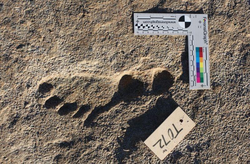 América. Actividad humana hace 23.000 años, milenios antes de lo conocido hasta ahora. Huellas halladas en Nuevo México. [Historia]  _1206612