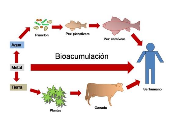 Biomagnificación, bioacumulación. Art11_10