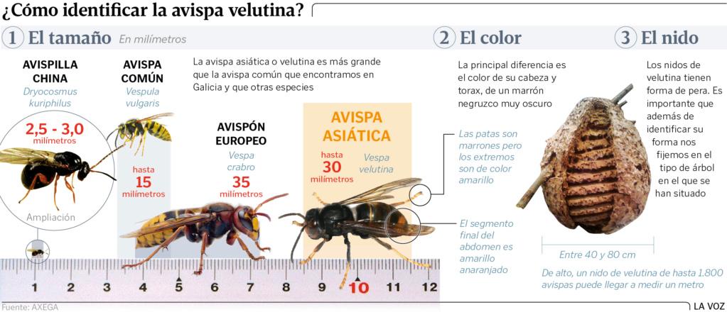 El caso de las abejas desaparecidas. - Página 3 Gg29p110
