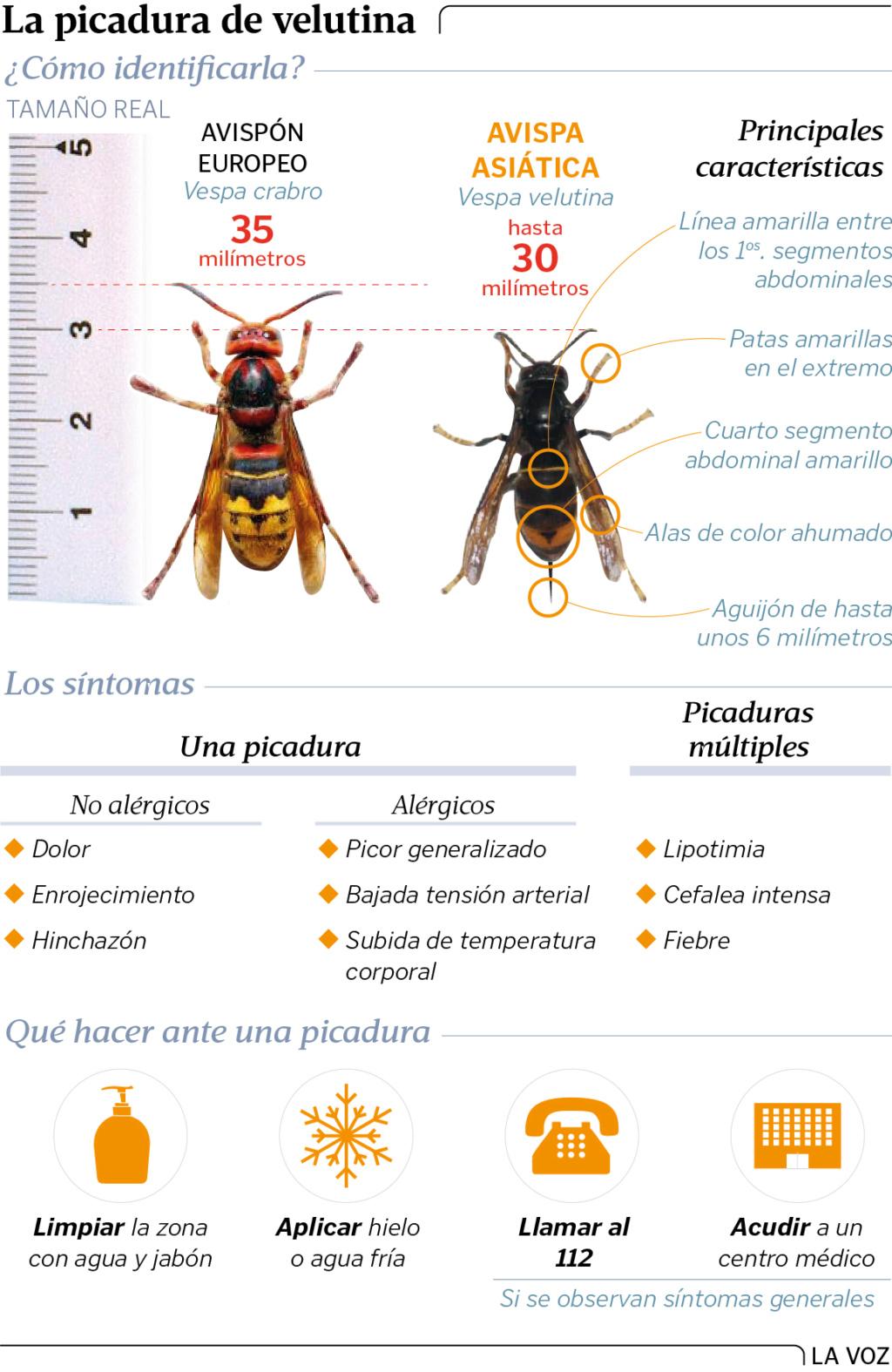 El caso de las abejas desaparecidas. - Página 3 Gn17p810