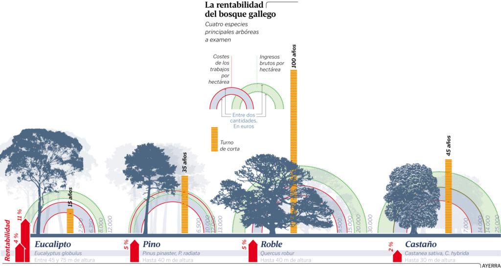 Más eucaliptos,  más   coníferas. Consecuencias de la sed de beneficio$ en la húmeda Galicia. El sector forestal. - Página 4 Grafic10