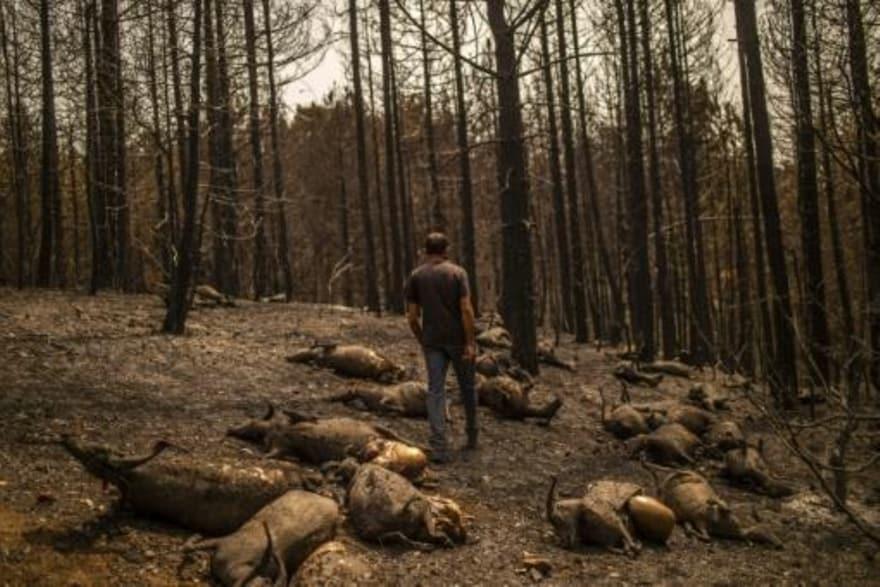 Incendios forestales en el mundo. Alimentados por el cambio climático como los de Grecia activan alertas... Image_17