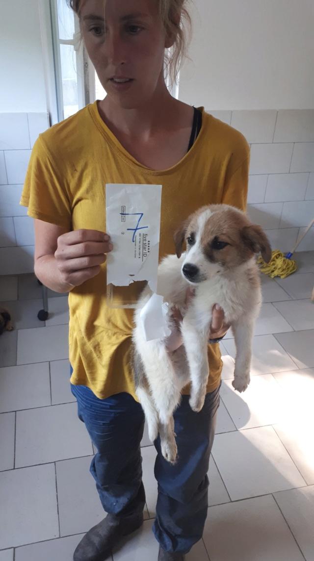 IZIE (ex GAZELLE) - femelle, taille moyenne adulte, née environ mai 2018 - REMEMBER ME LAND - Adoptée par Martine (Belgique) 39899910