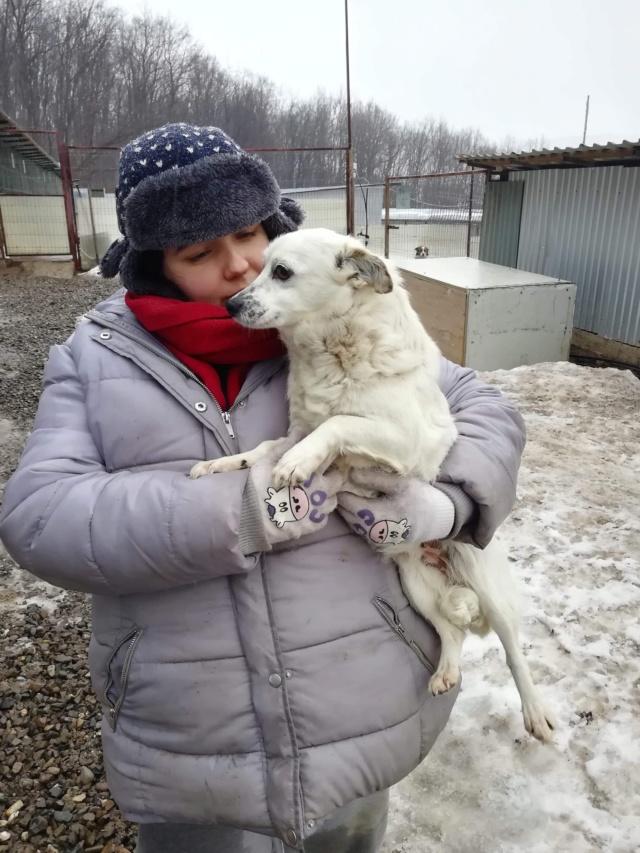 SHANI (ex SANI) - femelle croisée douce et gentille, de petite taille, née environ en février 2017 - PASCANI - adoptée par Christelle (88) 52097710