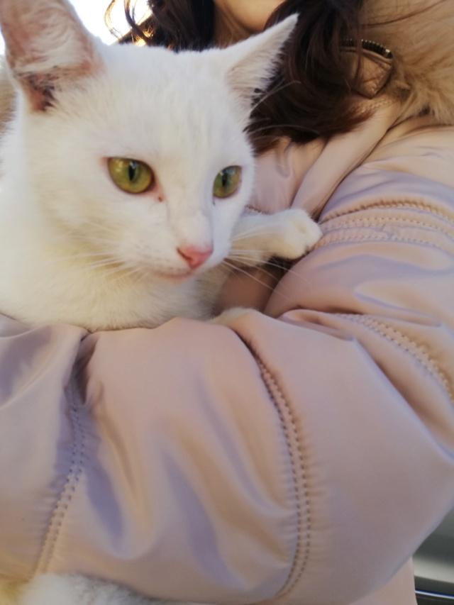 NERINA - Magnifique chatte blanche, née en 2018 - EN FA CHEZ FLORIN EN ROUMANIE - Adoptée par Stephanie (76) 52410410