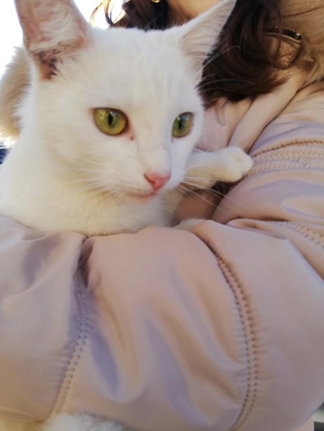 NERINA - Magnifique chatte blanche, née en 2018 - EN FA CHEZ FLORIN EN ROUMANIE - Adoptée par Stephanie (76) 52596011